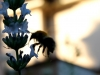 Bumblebee Evening Sun