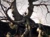 Tentacle Tree Lilienstein